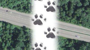 image.ch.bafu.fauna-wildtierkorridor_national